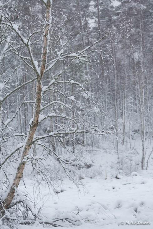Mera snö-6