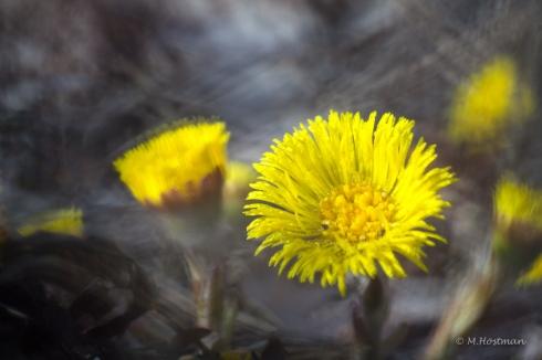 Blommor-2